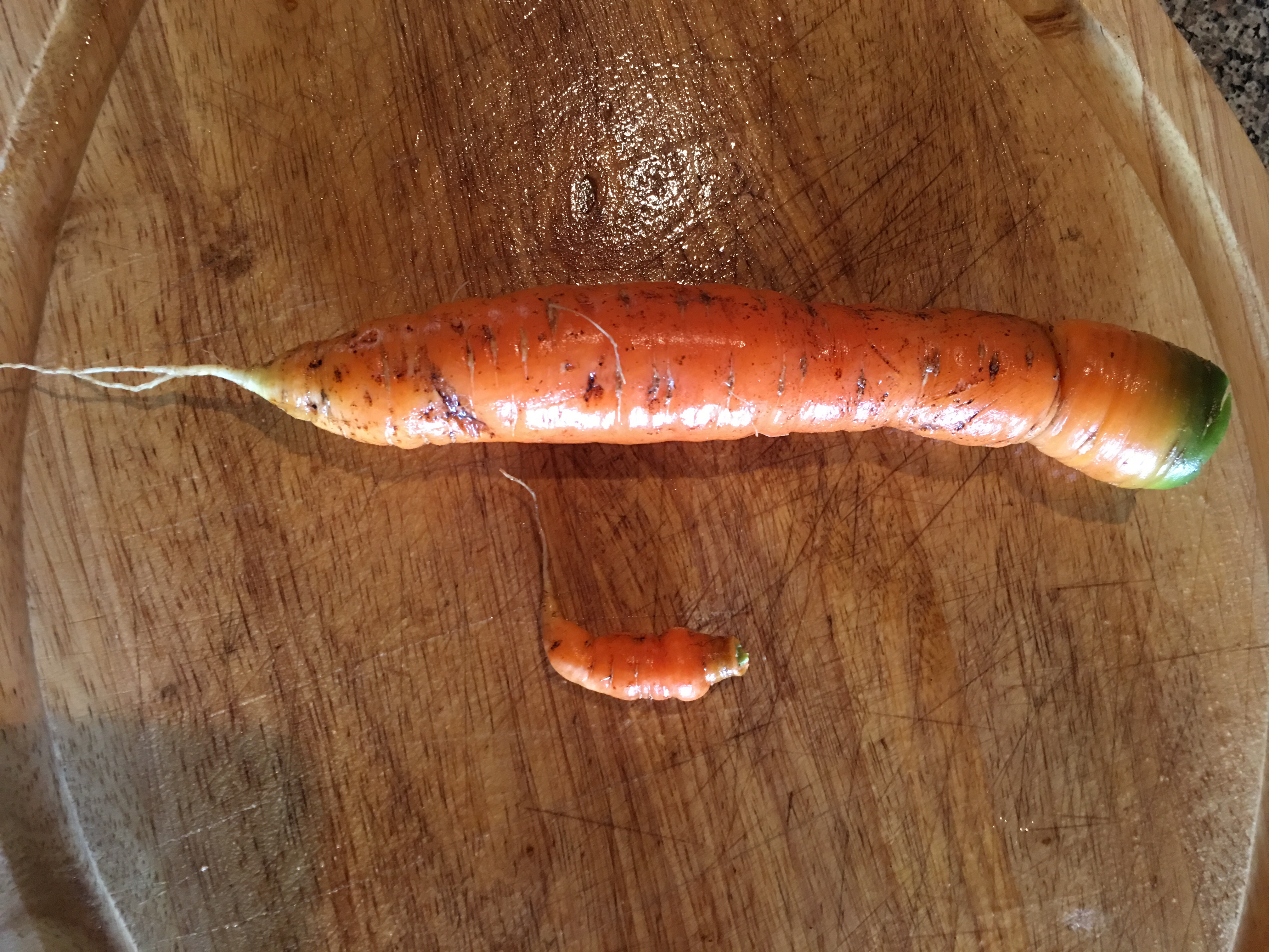 life is like a carrot   Every Day In April